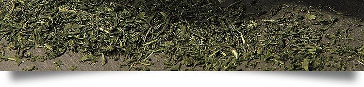 bio tee, biotee, kontrolliert biologischer anbau, Camellia sinensis, Was ist ee?, Tee-wissen, tea beschreibung, tee herkunft, teesorten, teetypen, tee geschichte - Naturteil / Natürlich Tee